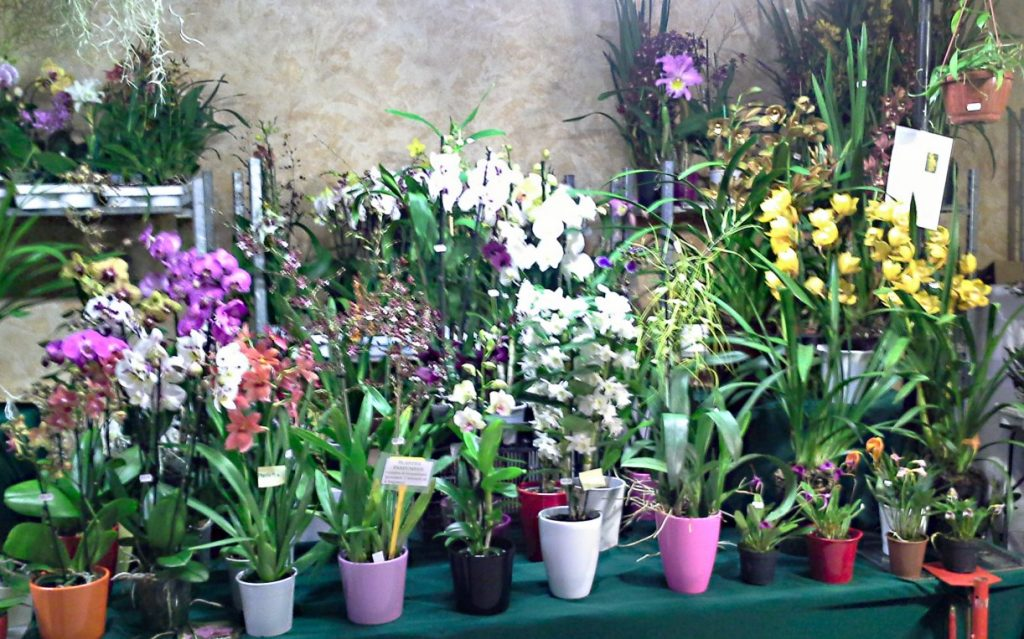 Barsac Orchidées