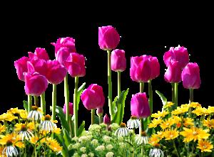 vente fleurs